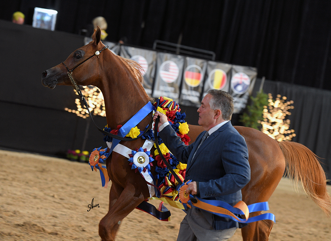 The General Lra Armstrong Arabians